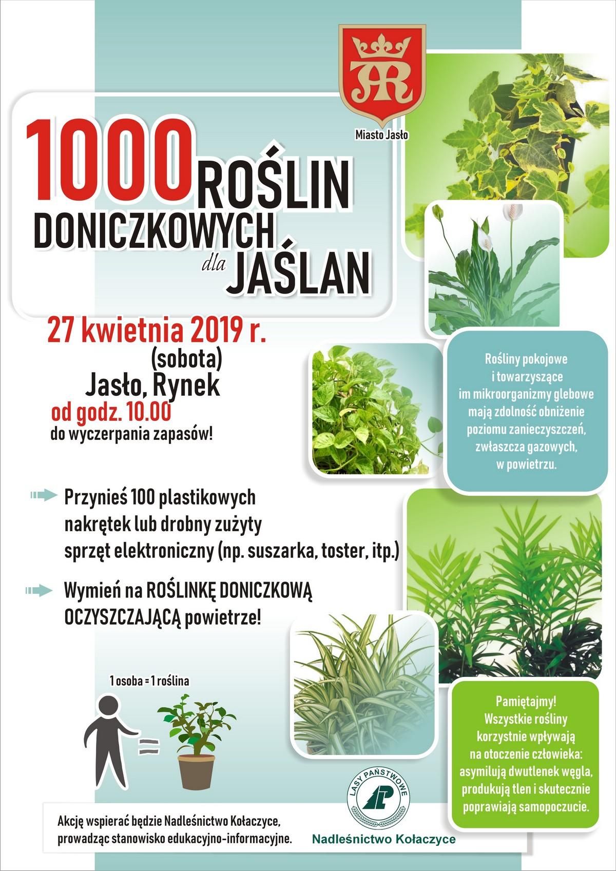 20190427__doniczkowe